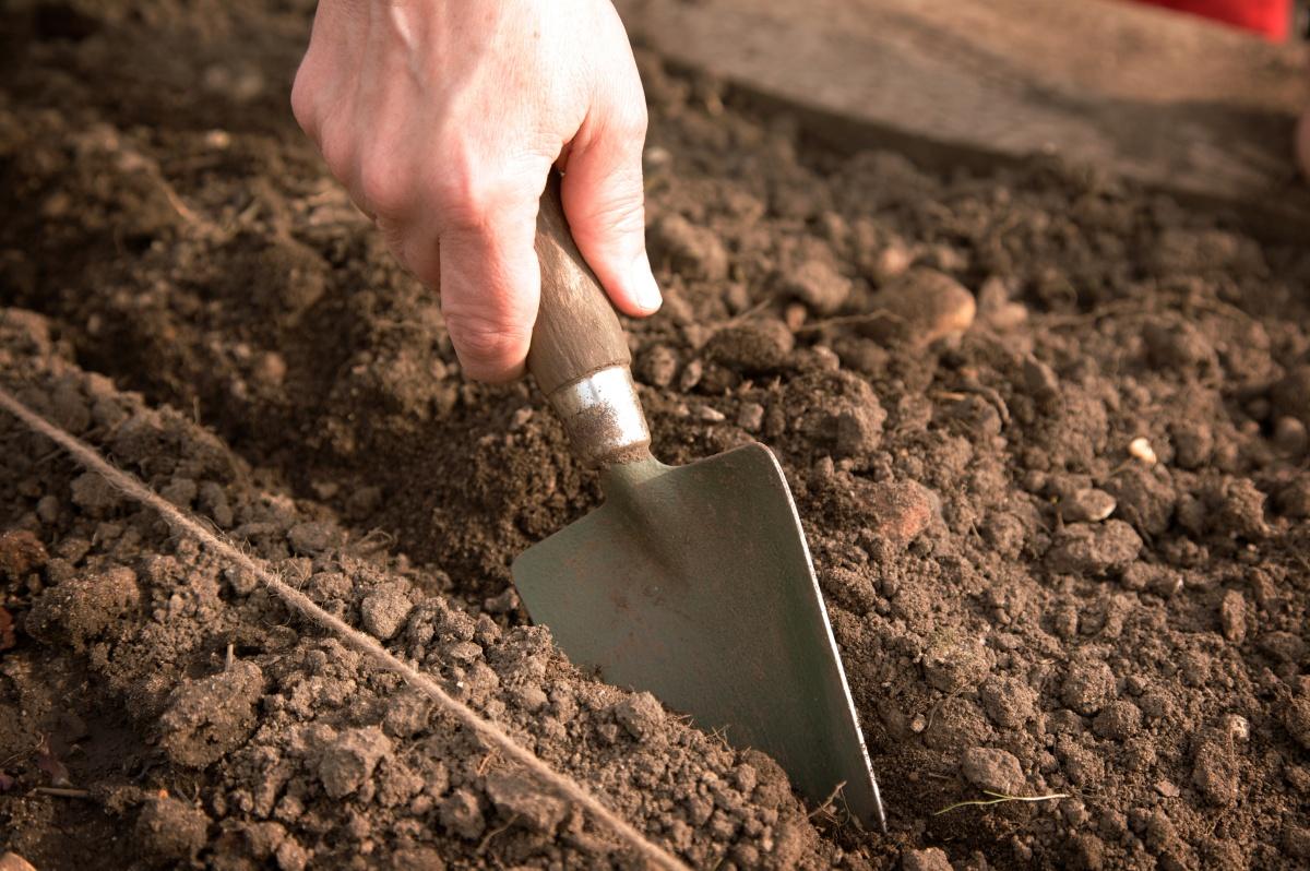 Подзимние посевы. Плюсы и минусы такого способа посева