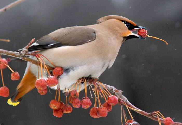 Отпугиватели птиц Защита урожая обеспечена