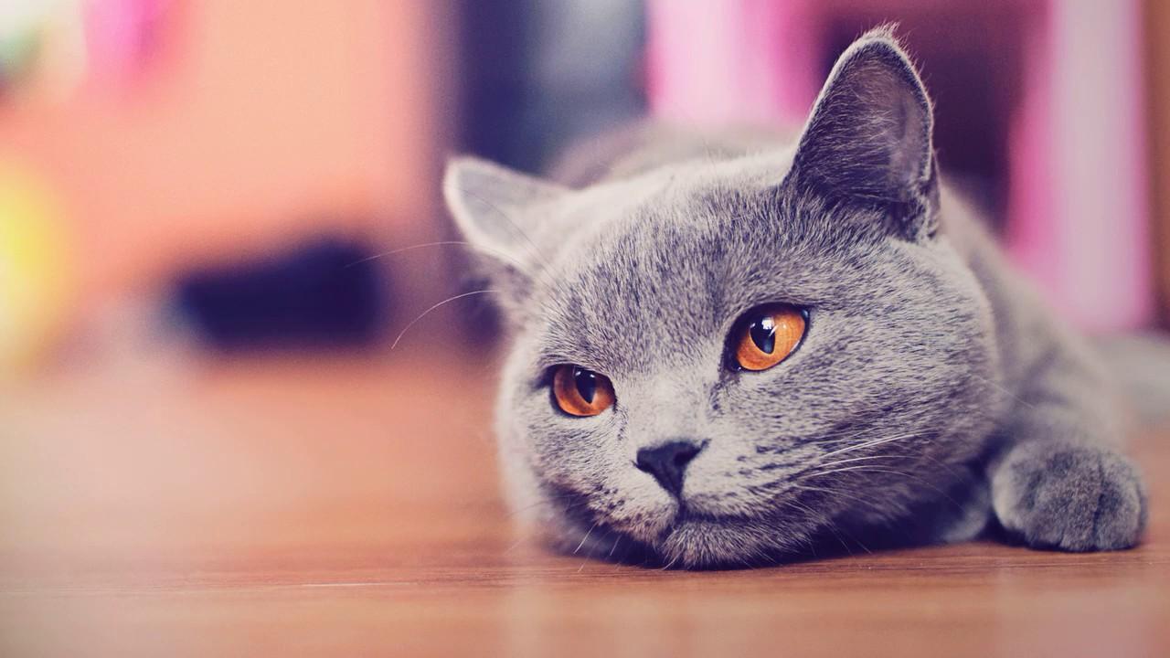 Как убрать кошачий запах мочи эффективно в квартире